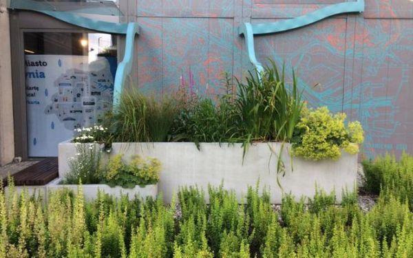 Ogród deszczowy - czym jest i jak go założyć?